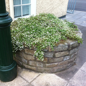 Irish Silica Limestone Building & Walling Cornerstones